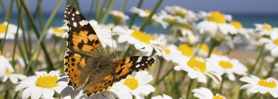 Photo of butterfly with daisies