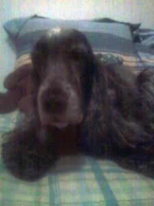 My Dog, Romie